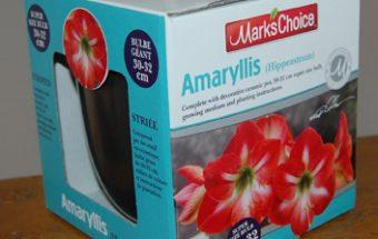 Dec16_amaryllis kit