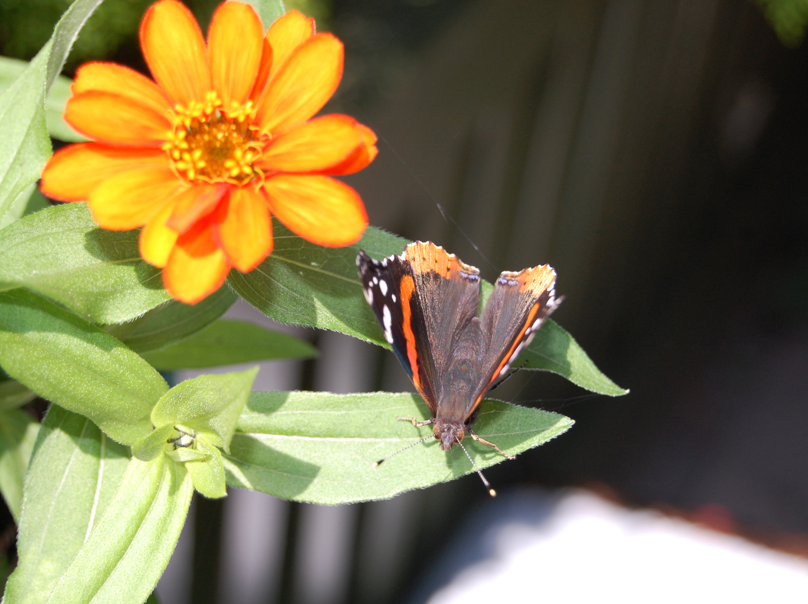 April13_pollinator