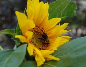 blog_honeybee