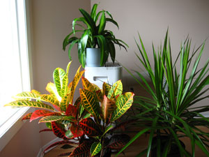 blog_tropicals1