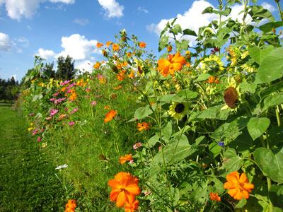 blog_wildflowers