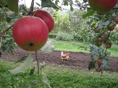 blog_apples1