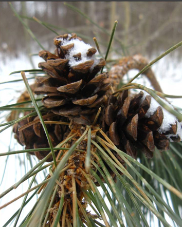 blog_pinecone3