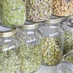 sprouts jars