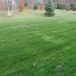 Nov13_lawn
